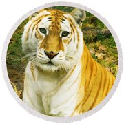Tabby Tiger I Round Beach Towel