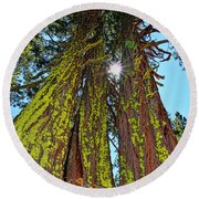 Tahoe Trees - Lake Tahoe By Diana Sainz Round Beach Towel