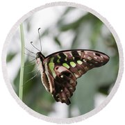 Tailed Jay Butterfly Round Beach Towel