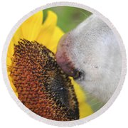 Take Time To Smell The Sunflowers Round Beach Towel