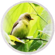Tanager Round Beach Towel