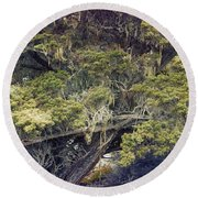 Tangled Neighbors Of The Lone Cypress Round Beach Towel