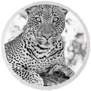 Tarangire Leopard Round Beach Towel