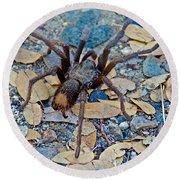 Tarantula Spider In Park Sierra Near Coarsegold-california Round Beach Towel