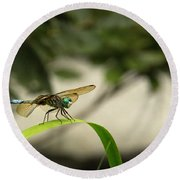 Teal Dragonfly Round Beach Towel