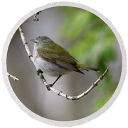 Tennessee Warbler  Round Beach Towel