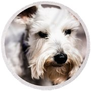 Terrier Upclose Round Beach Towel