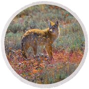 Teton Coyote Round Beach Towel