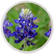 Texas Bluebonnets Round Beach Towel