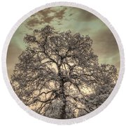 Texas Oak Tree Round Beach Towel