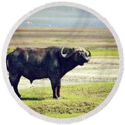 The African Buffalo. Ngorongoro In Tanzania. Round Beach Towel