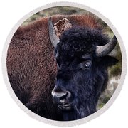 The American Bison Round Beach Towel