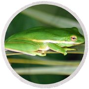 The American Green Tree Frog Round Beach Towel