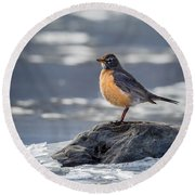 The American Robin Square Round Beach Towel