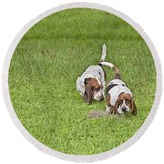 The Bassets Round Beach Towel