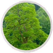 The Beauty Of A Tree Round Beach Towel