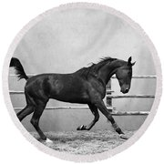 The Beauty Of The Horse Round Beach Towel