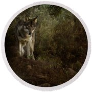 The Big And Not Too Bad Wolf Round Beach Towel