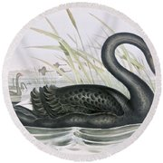 The Black Swan Round Beach Towel by John Gould