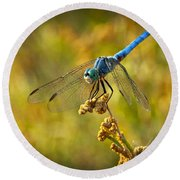 The Blue Dragonfly  Round Beach Towel