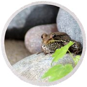 The Bronze Frog Round Beach Towel