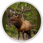 The Bull Elk Round Beach Towel