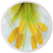 The Christmas Lilly Round Beach Towel