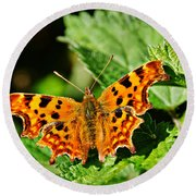 The Comma -- Polygonia C-album Round Beach Towel