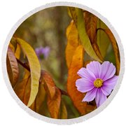 The Cosmos In The Peach Tree Round Beach Towel