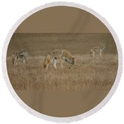 The Coyotes Round Beach Towel