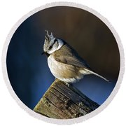 The Crested Tit In The Sun Round Beach Towel