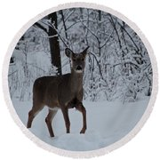 The Deer In The Snow Round Beach Towel