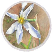 The Delicate Autumn Lady - Narcissus Serotinus Round Beach Towel