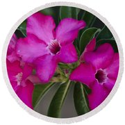 The Desert Rose  Round Beach Towel