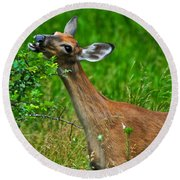 The Dreaded Deer Giraffe Round Beach Towel