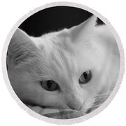 The Dreamer Cat Round Beach Towel