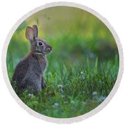 The Eastern Cottontail Round Beach Towel