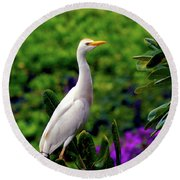 The Egret Outside My Window Round Beach Towel