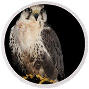 The Falcon Round Beach Towel