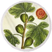 The Fig Tree Round Beach Towel