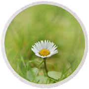 The First White Daisy Round Beach Towel