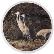 The Gathering...sandhill Cranes Round Beach Towel