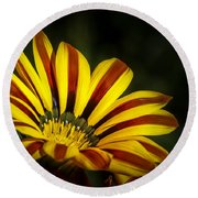 The Gazania Round Beach Towel