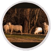 The Gazing And Grazing Sheep Round Beach Towel