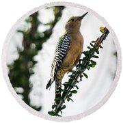 The Gila  Woodpecker Round Beach Towel