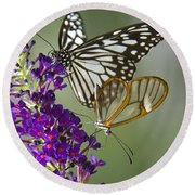 The Glasswing And A Friend  Round Beach Towel