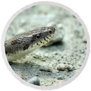 The Gray Eastern Rat Snake Right Side Head Shot Round Beach Towel