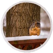 The Grey Squirrel George In Winter Round Beach Towel