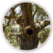 The Hole Tree Santa Margarita Lake Round Beach Towel