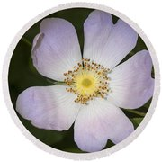 The Humble Dog Rose Round Beach Towel